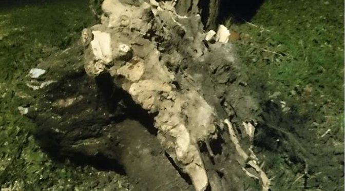 Výjezd jednotky: Odstranění stromu