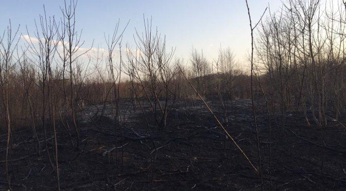 Požár: Polní porost, Tráva