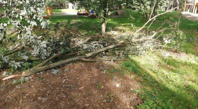 Odstranění větví
