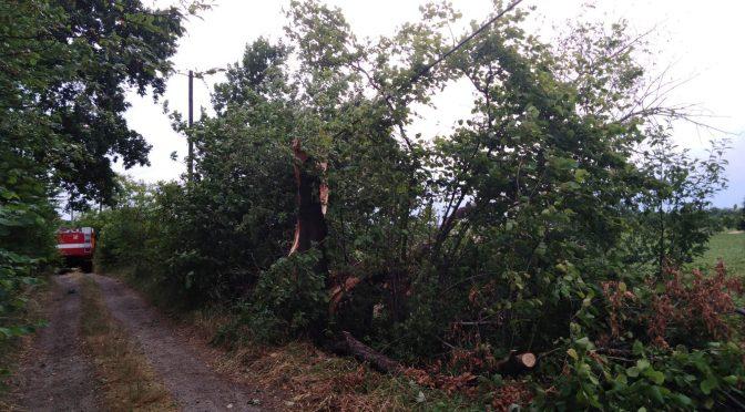 Odstranění stromu