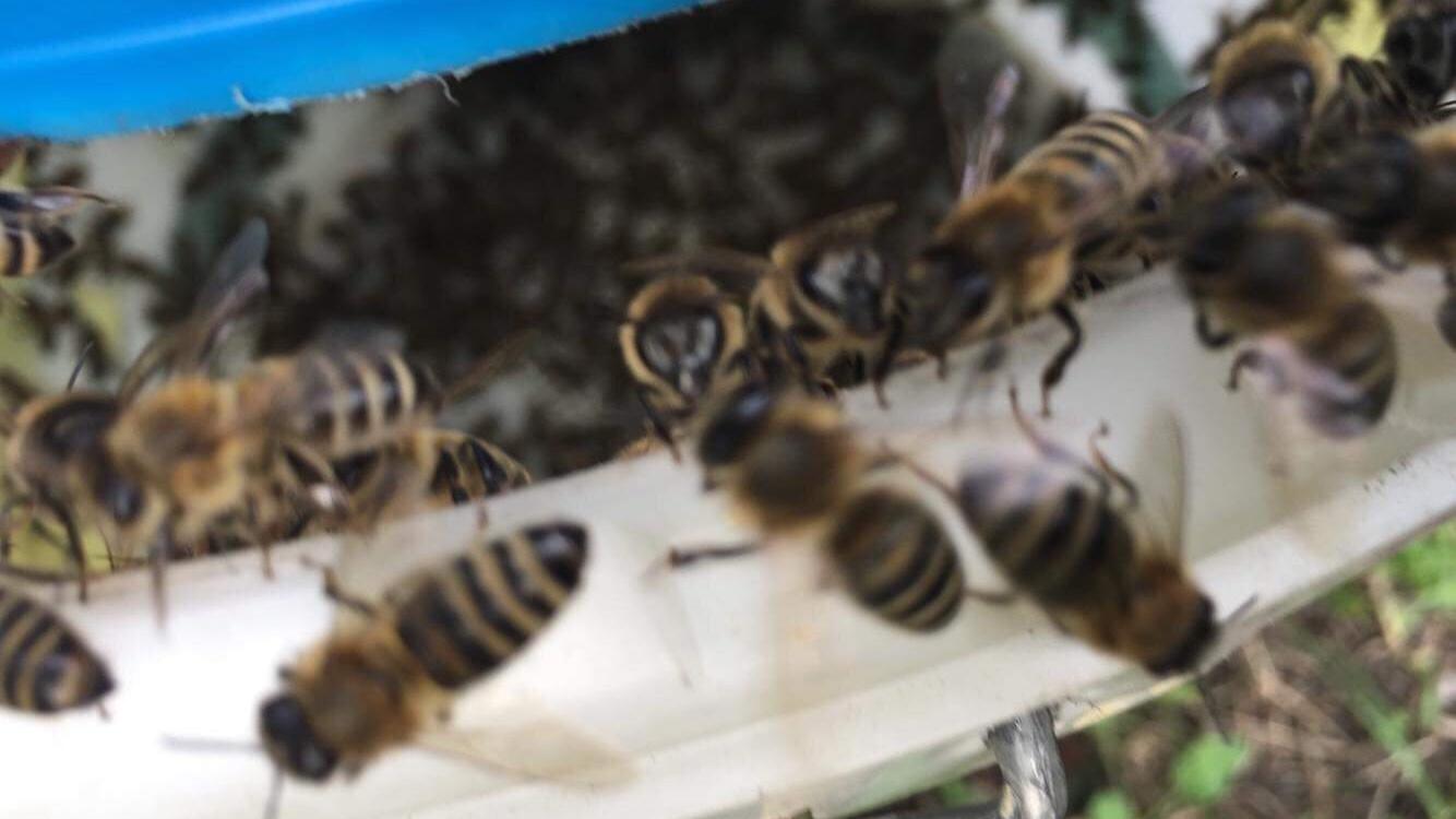 3x likvidace obtížného hmyzu
