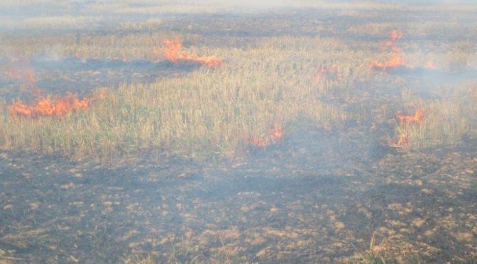 Požár strniště