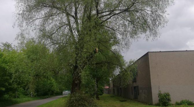 Odstranění větve