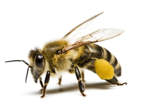 Likvidace obtížného hmyzu