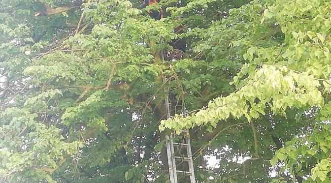Odstranění dronu ze stromu